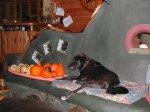 Dog guarding the squash harvest