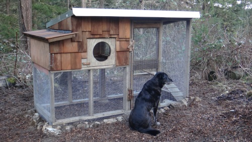 New Duck Coop near the pond