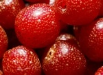 autumn olive berry closeup