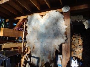 Elk hide is being stretched on the woodshed.