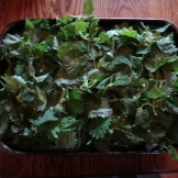 Nettle leaf. Finally finished all the drying. Can now be used for tea or soups.