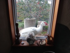 Duck on window sill