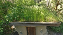 Living Roof on the Workshop